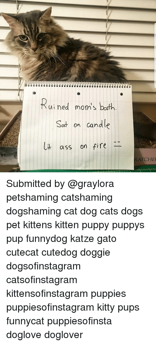 Ass, Cats, and Dogs: Rui ned moni's both  Sat on candle  ass on fire  RATCHE Submitted by @graylora petshaming catshaming dogshaming cat dog cats dogs pet kittens kitten puppy puppys pup funnydog katze gato cutecat cutedog doggie dogsofinstagram catsofinstagram kittensofinstagram puppies puppiesofinstagram kitty pups funnycat puppiesofinsta doglove doglover