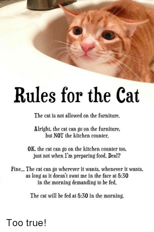 rules-for-the-cat-the-cat-is-not-allowed