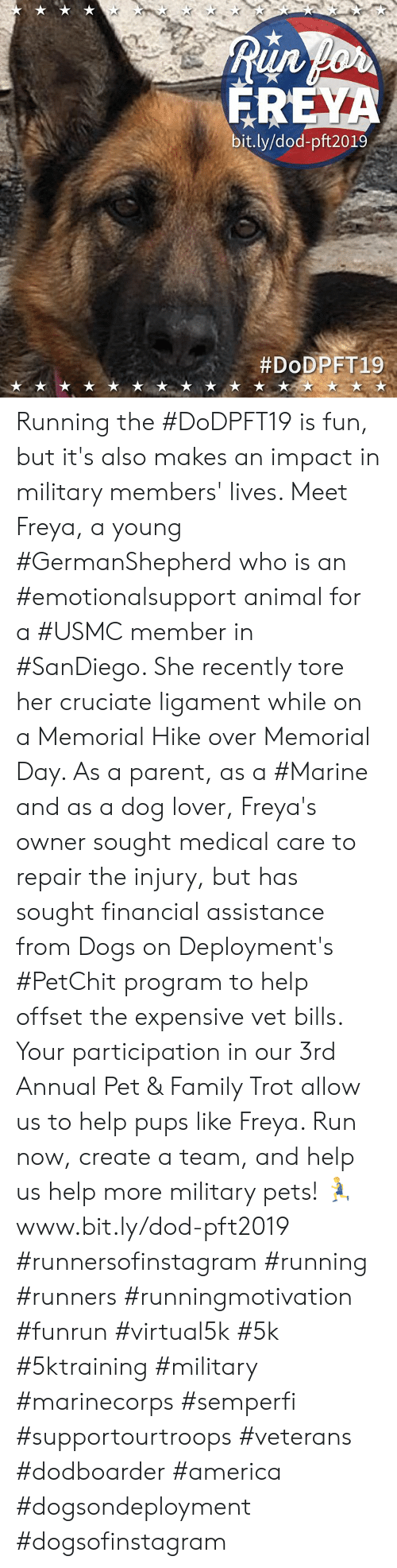 ligament: Run for  FREYA  bit.ly/dod-pft2019  Running the #DoDPFT19 is fun, but it's also makes an impact in military members' lives. Meet Freya, a young #GermanShepherd who is an #emotionalsupport animal for a #USMC member in #SanDiego. She recently tore her cruciate ligament while on a Memorial Hike over Memorial Day. As a parent, as a #Marine and as a dog lover, Freya's owner sought medical care to repair the injury, but has sought financial assistance from Dogs on Deployment's #PetChit program to help offset the expensive vet bills.   Your participation in our 3rd Annual Pet & Family Trot allow us to help pups like Freya.   Run now, create a team, and help us help more military pets! 🏃www.bit.ly/dod-pft2019  #runnersofinstagram #running #runners #runningmotivation #funrun #virtual5k #5k #5ktraining #military  #marinecorps #semperfi #supportourtroops #veterans #dodboarder #america #dogsondeployment #dogsofinstagram