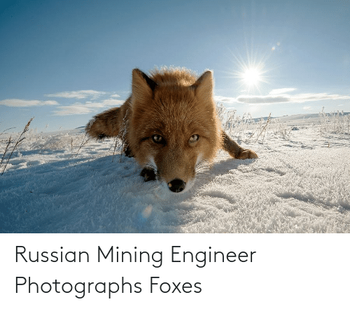 foxes: Russian Mining Engineer Photographs Foxes