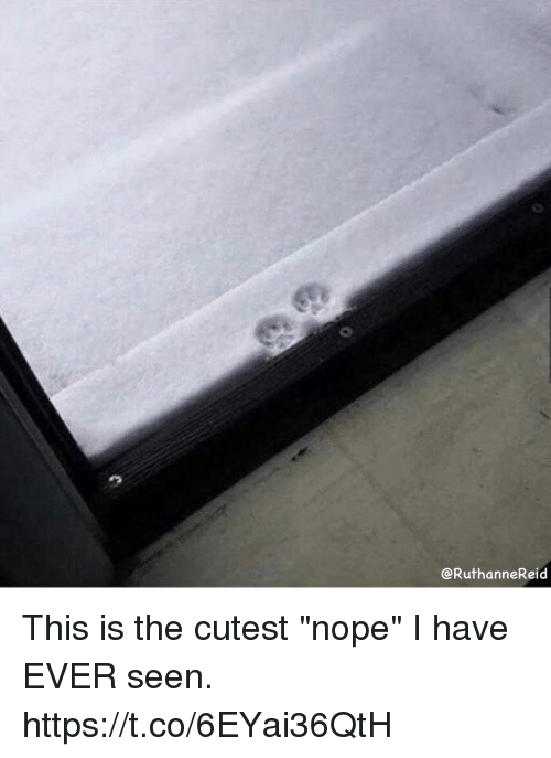 """Nope, Girl Memes, and This: @RuthanneReid This is the cutest """"nope"""" I have EVER seen. https://t.co/6EYai36QtH"""
