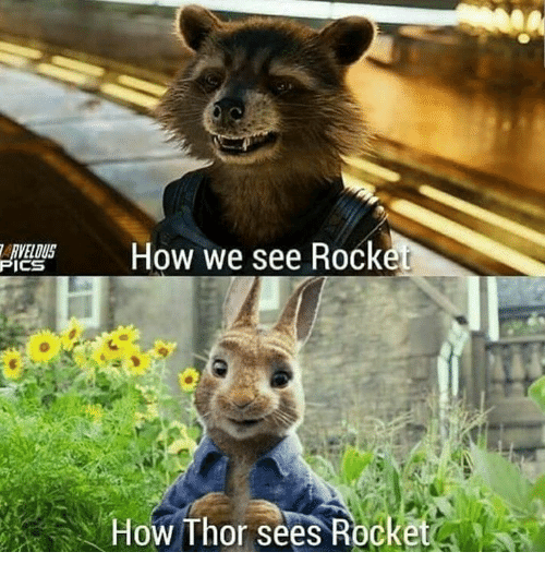 Memes, Thor, and 🤖: RVELOUS  ICS  How we see Rocke  How Thor sees Rocket