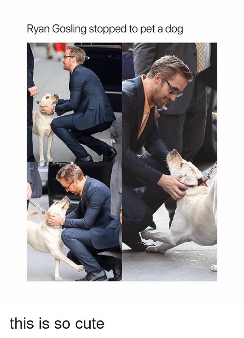 Cute, Ryan Gosling, and Girl Memes: Ryan Gosling stopped to pet a dog this is so cute