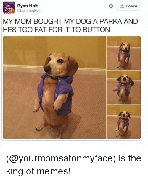 Funny, Meme, and Memes: Ryan Holt  Follow  @LightningHoltt  MY MOM BOUGHT MY DOG A PARKA AND  HES TOO FAT FOR IT TO BUTTON (@yourmomsatonmyface) is the king of memes!