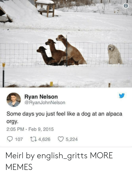 Alpaca: Ryan Nelson  @RyanJohnNelson  Some days you just feel like a dog at an alpaca  orgy  2:05 PM - Feb 9, 2015  107 4,626 5,224 Meirl by english_gritts MORE MEMES