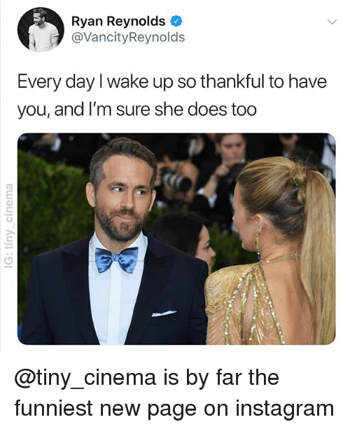 Instagram, Ryan Reynolds, and Dank Memes: Ryan Reynolds *  @VancityReynolds  Every day l wake up so thankful to have  you, and I'm sure she does too @tiny_cinema is by far the funniest new page on instagram