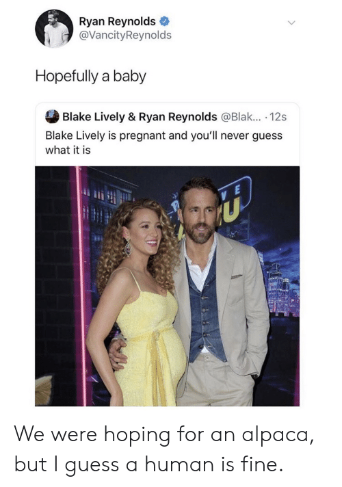 Alpaca: Ryan Reynolds  @VancityReynolds  Hopefully a baby  Blake Lively & Ryan Reynolds @Blak... . 12s  Blake Lively is pregnant and you'll never guess  what it is We were hoping for an alpaca, but I guess a human is fine.