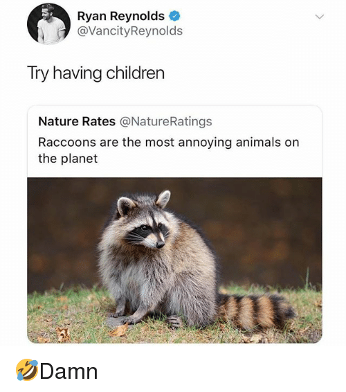 Animals, Children, and Memes: Ryan Reynolds  @VancityReynolds  Try having children  Nature Rates @NatureRatings  Raccoons are the most annoying animals on  the planet 🤣Damn