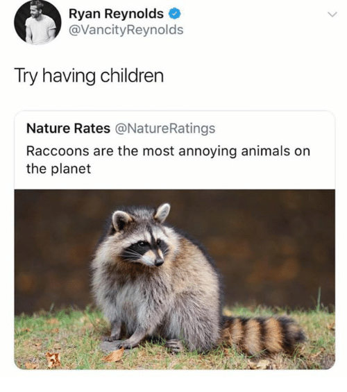 Animals, Children, and Ryan Reynolds: Ryan Reynolds  @VancityReynolds  Try having children  Nature Rates @NatureRatings  Raccoons are the most annoying animals on  the planet