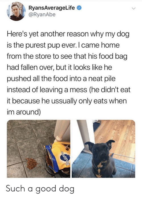 Yet Another: RyansAverageLife  @RyanAbe  Here's yet another reason why my dog  is the purest pup ever. I came home  from the store to see that his food bag  had fallen over, but it looks like he  pushed all the food into a neat pile  instead of leaving a mess (he didn't eat  it because he ussually only eats when  im around)  Pedigree Such a good dog