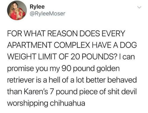chihuahua: Rylee  @RyleeMoser  FOR WHAT REASON DOES EVERY  APARTMENT COMPLEX HAVE A DOG  WEIGHT LIMIT OF 20 POUNDS? I can  promise you my 90 pound golden  retriever is a hell of a lot better behaved  than Karen's 7 pound piece of shit devil  worshipping chihuahua