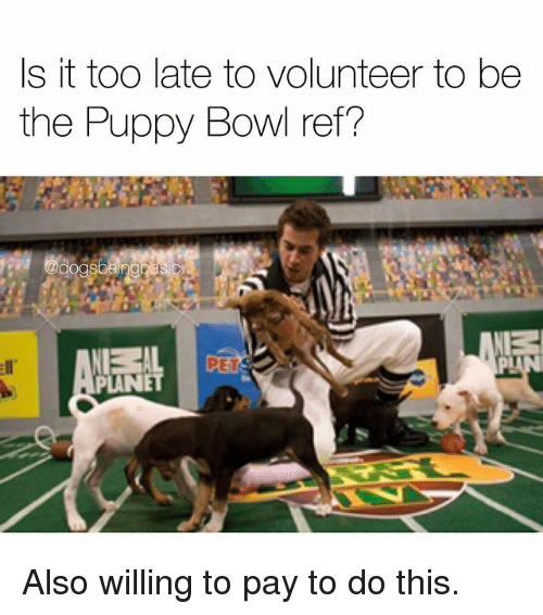 s it too late to volunteer to be the puppy 30649153 🔥 25 best memes about puppy bowl puppy bowl memes