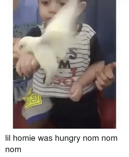 Funny, Homie, and Hungry: S lil homie was hungry nom nom nom