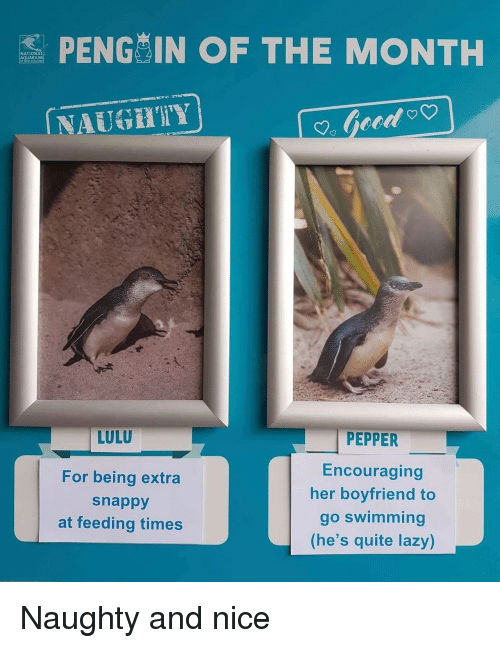 lulu: S PENG IN OF THE MONTH  NATIONA  AQUARIUM  NAUGHIY  LULU  For being extra  snappy  at feeding times  PEPPER  Encouraging  her boyfriend to  go swimming  (he's quite lazy) Naughty and nice