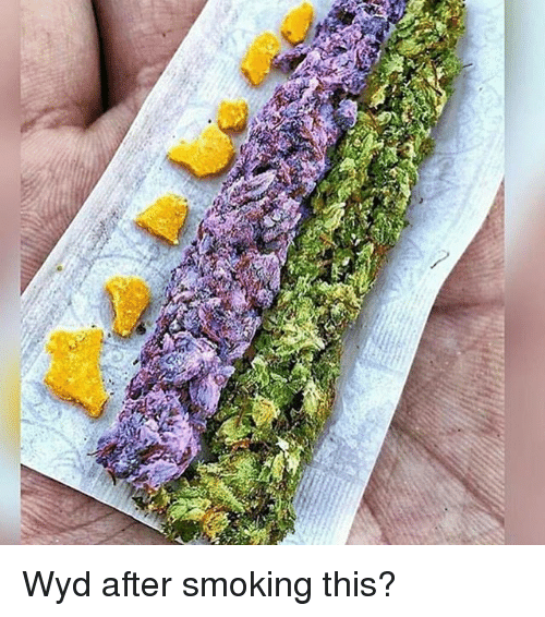 Memes, Smoking, and Wyd: S Wyd after smoking this?