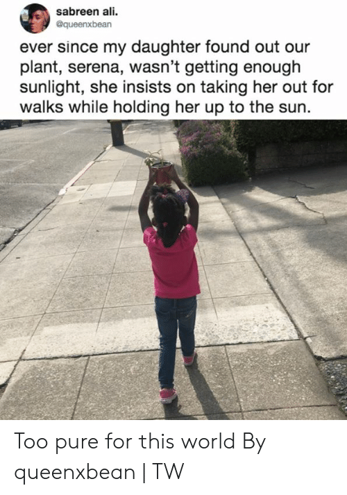 serena: sabreen ali.  @queenxbean  ever since my daughter found out our  plant, serena, wasn't getting enough  sunlight, she insists on taking her out for  walks while holding her up to the sun. Too pure for this world  By queenxbean | TW