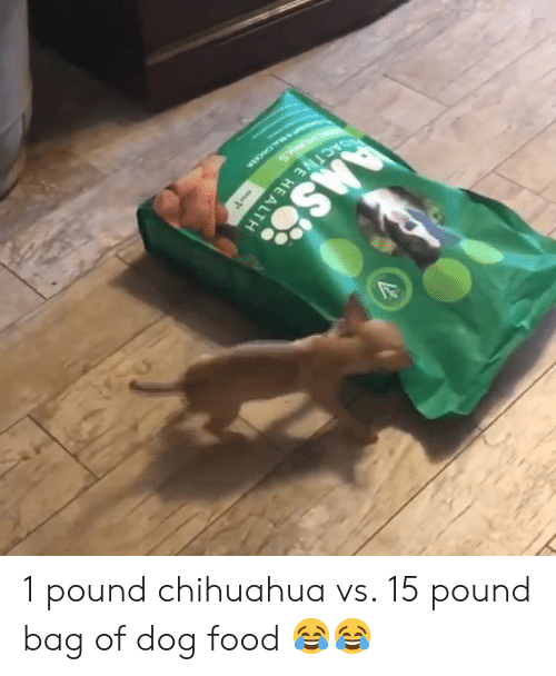chihuahua: SACTIVE HEALTH  -1 1 pound chihuahua vs. 15 pound bag of dog food 😂😂