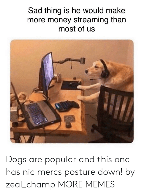 Nic: Sad thing is he would make  more money streaming than  most of us Dogs are popular and this one has nic mercs posture down! by zeal_champ MORE MEMES