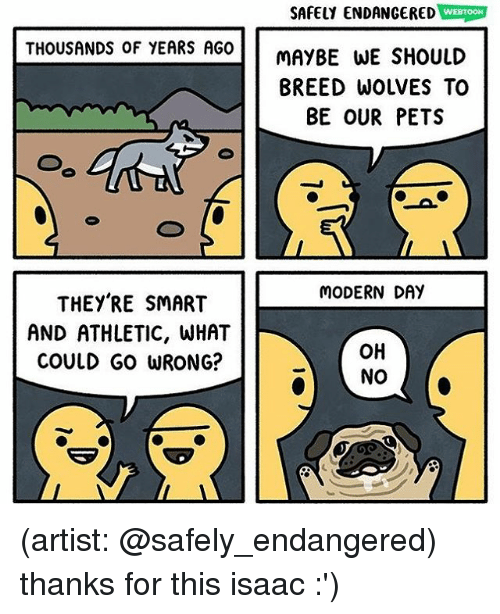 Memes, Pets, and Wolves: SAFELY ENDANGERED WEBTOON  THOUSANDS OF YEARS AGO  MAYBE WE SHOULD  BREED WOLVES TO  BE OUR PETS  MODERN DAY  THEY'RE SMART  AND ATHLETIC, WHAT  COULD GO WRONG?  OH  NO (artist: @safely_endangered) thanks for this isaac :')