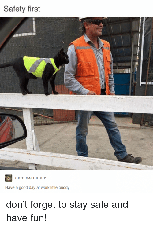 Work, Good, and Fun: Safety first  COOLCATGROUP  Have a good day at work little buddy <p>don't forget to stay safe and have fun!</p>