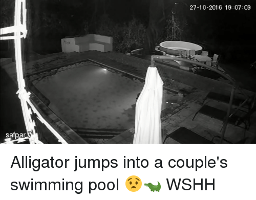 Memes, Wshh, and Alligator: safpar 7  27-10-2016 19:07:09 Alligator jumps into a couple's swimming pool 😧🐊 WSHH