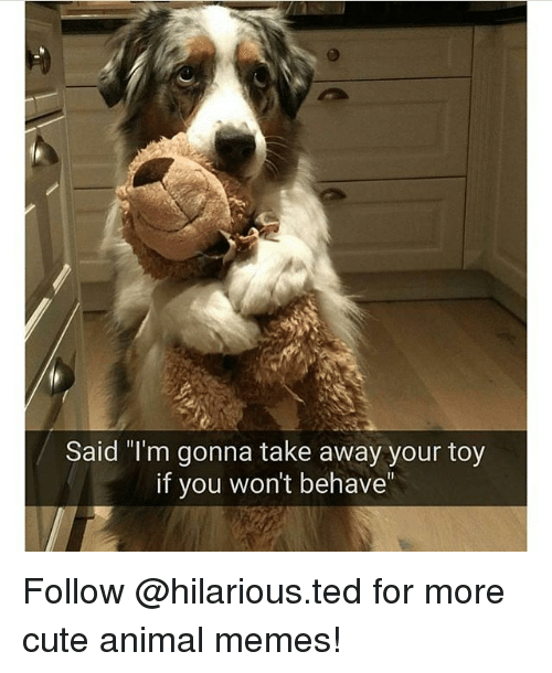 "Hilariousness: Said ""I'm gonna take away your toy  if you won't behave Follow @hilarious.ted for more cute animal memes!"