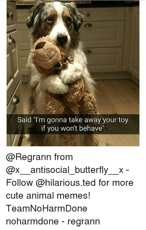 """Animals Meme: Said """"I'm gonna take away your toy  if you won't behave @Regrann from @x__antisocial_butterfly__x - Follow @hilarious.ted for more cute animal memes! TeamNoHarmDone noharmdone - regrann"""