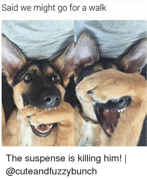 suspense: Said we might go for a walk The suspense is killing him! | @cuteandfuzzybunch