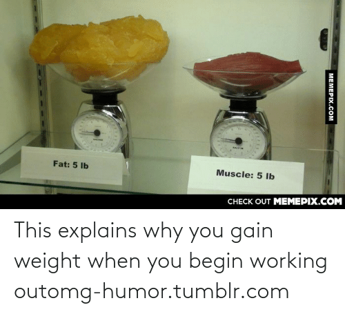 saif: SAIF  Fat: 5 Ib  Muscle: 5 lb  CHECK OUT MEMEPIX.COM  MEMEPIX.COM This explains why you gain weight when you begin working outomg-humor.tumblr.com