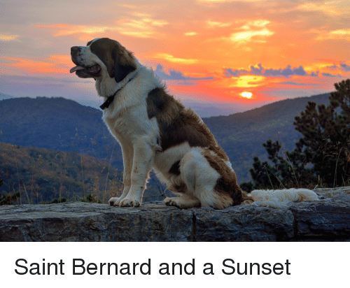 Sunset, Saint, and Saint Bernard: Saint Bernard and a Sunset