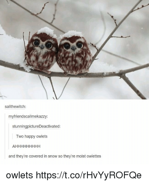 Memes, Happy, and Snow: salithewitch  myfriendscallmekazzy:  stunningpictureDeactivated:  Two happy owlets  and they're covered in snow so they're moist owlettes owlets https://t.co/rHvYyROFQe