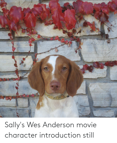 Wes: Sally's Wes Anderson movie character introduction still
