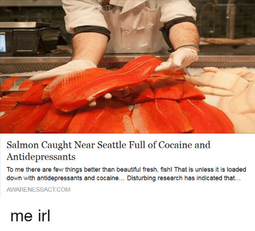 Funny cocaine memes of 2016 on sizzle drugs for Salmon fishing near me