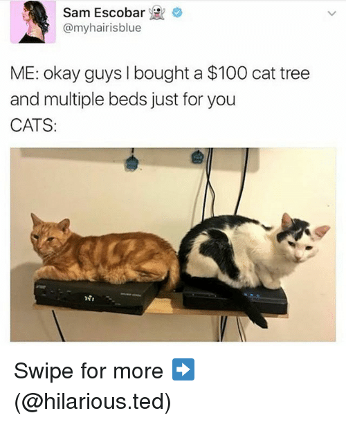 Anaconda, Cats, and Funny: Sam Escobar  @my hair ISblue  ME: okay guys I bought a $100 cat tree  and multiple beds just for you  CATS Swipe for more ➡ (@hilarious.ted)