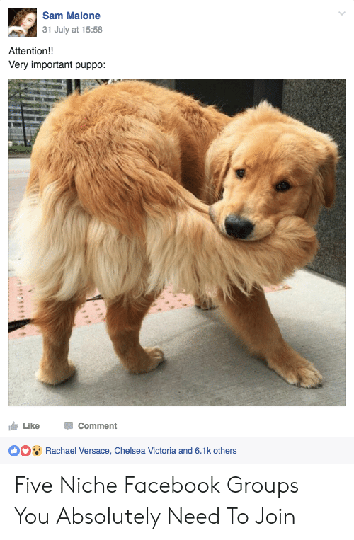 sam malone: Sam Malone  31 July at 15:58  Attention!!  Very important puppo:  Like Comment  Rachael Versace, Chelsea Victoria and 6.1k others Five Niche Facebook Groups You Absolutely Need To Join