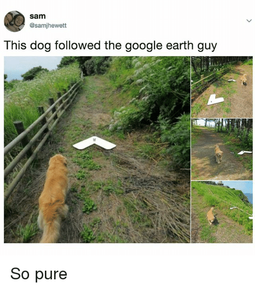 Funny, Google, and Earth: sam  @samjhewett  This dog followed the google earth guy So pure
