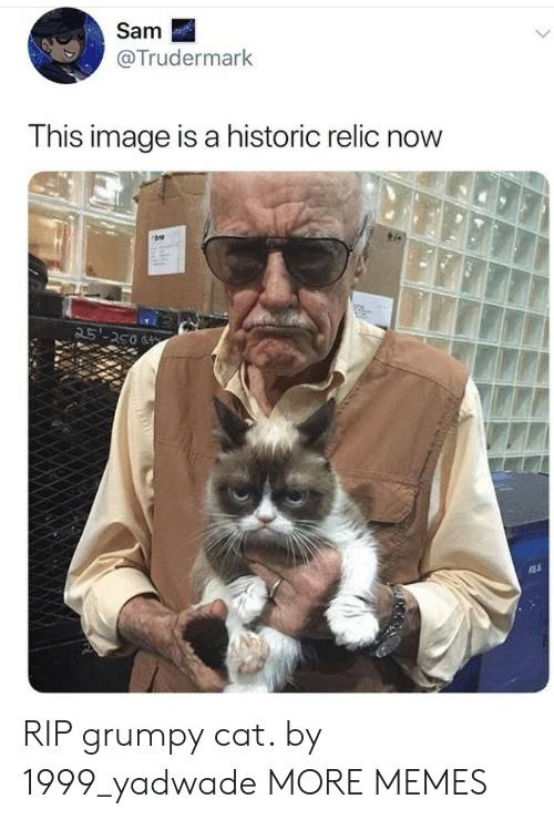 Grumpy Cat: Sam  @Trudermark  This image is a historic relic now  25'-250 RIP grumpy cat. by 1999_yadwade MORE MEMES