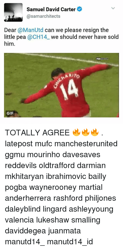 Memes, 🤖, and Dears: Samuel David Carter  @samarchitects  Dear @ManUtd can we please resign the  little pea @CH14 we should never have sold  him.  RITO  GIF TOTALLY AGREE 🔥🔥🔥 . latepost mufc manchesterunited ggmu mourinho davesaves reddevils oldtrafford darmian mkhitaryan ibrahimovic bailly pogba waynerooney martial anderherrera rashford philjones daleyblind lingard ashleyyoung valencia lukeshaw smalling daviddegea juanmata manutd14_ manutd14_id