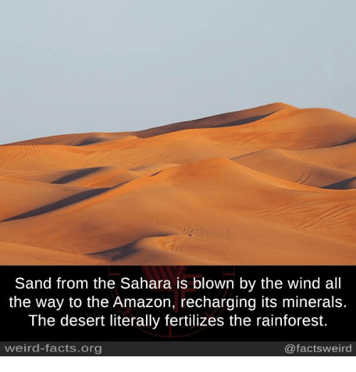 Memes, 🤖, and Desert: Sand from the Sahara is blown by the wind all  the way to the Amazon, recharging its minerals.  The desert literally fertilizes the rainforest.  @factsweird  weird-facts org