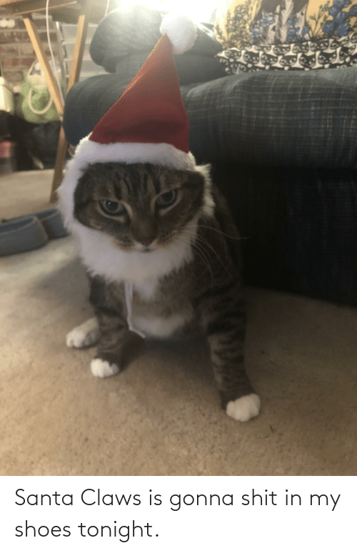 in-my-shoes: Santa Claws is gonna shit in my shoes tonight.