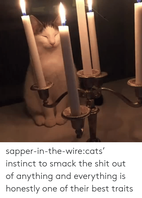 wire: sapper-in-the-wire:cats' instinct to smack the shit out of anything and everything is honestly one of their best traits