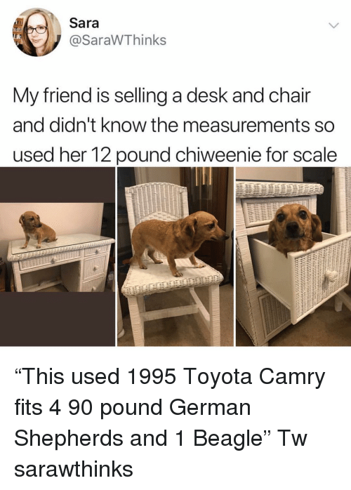 "Memes, Toyota, and Desk: Sara  @SaraWThinks  My friend is selling a desk and chair  and didn't know the measurements so  used her 12 pound chiweenie for scale ""This used 1995 Toyota Camry fits 4 90 pound German Shepherds and 1 Beagle"" Tw sarawthinks"