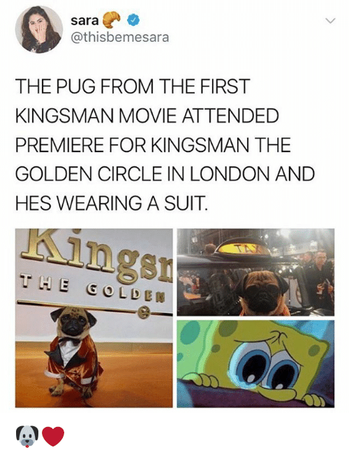 kingsman: sara  @thisbemesara  THE PUG FROM THE FIRST  KINGSMAN MOVIE ATTENDED  PREMIERE FOR KINGSMAN THE  GOLDEN CIRCLE IN LONDON AND  HES WEARING A SUIT  ngsn 🐶❤️