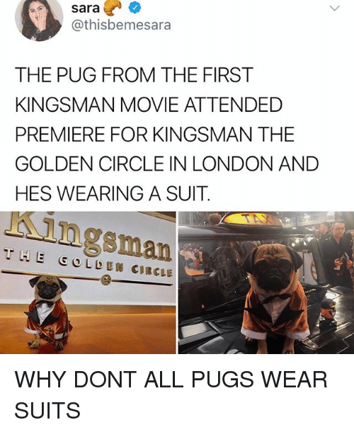 kingsman: sara?  @thisbemesara  THE PUG FROM THE FIRST  KINGSMAN MOVIE ATTENDED  PREMIERE FOR KINGSMAN THE  GOLDEN CIRCLE IN LONDON AND  HES WEARING A SUIT.  Kingsman  THE GOLDEN CIRCLE WHY DONT ALL PUGS WEAR SUITS