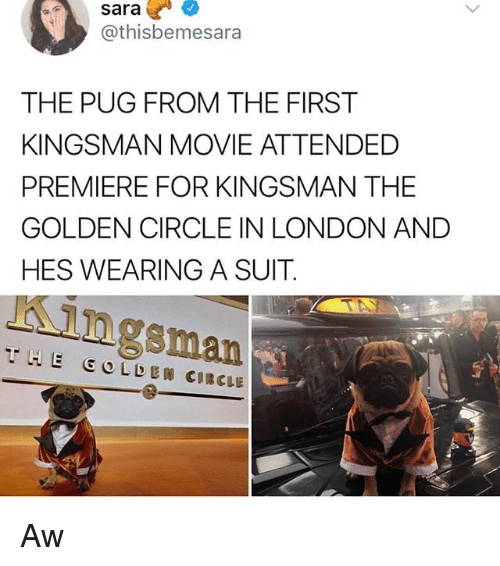 Memes, London, and Movie: sara  @thisbemesara  THE PUG FROM THE FIRST  KINGSMAN MOVIE ATTENDED  PREMIERE FOR KINGSMAN THE  GOLDEN CIRCLE IN LONDON AND  HES WEARING A SUIT  Kingsman  THE GOLDEN CIRCLE Aw