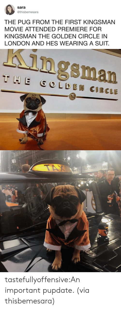 kingsman: Sara  @thisbemesara  THE PUG FROM THE FIRST KINGSMAN  MOVIE ATTENDED PREMIERE FOR  KINGSMAN THE GOLDEN CIRCLE IN  LONDON AND HES WEARING A SUIT.   Kingsman tastefullyoffensive:An important pupdate. (via thisbemesara)