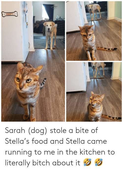 Food: Sarah (dog) stole a bite of Stella's food and Stella came running to me in the kitchen to literally bitch about it 🤣 🤣