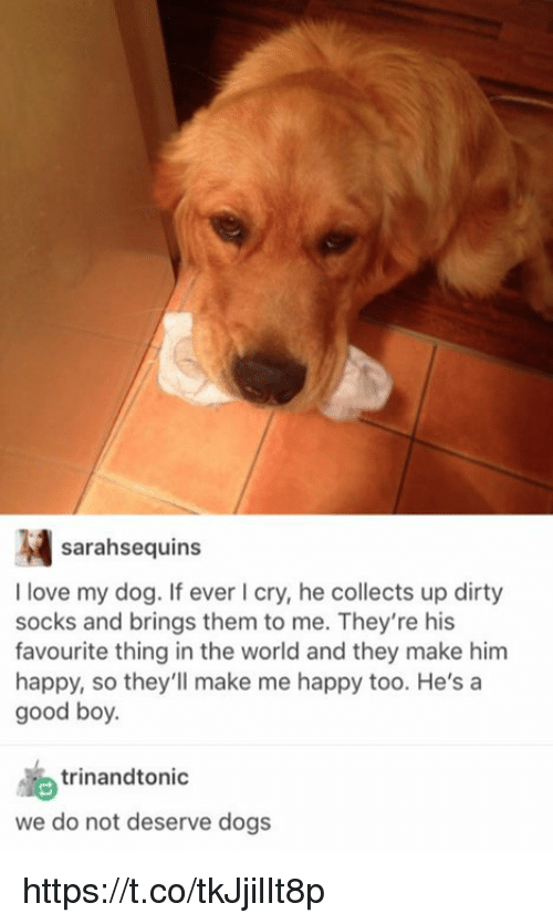Girl Memes: sarahsequins  I love my dog. If ever I cry, he collects up dirty  socks and brings them to me. They're his  favourite thing in the world and they make him  happy, so they'll make me happy too. He's a  good boy.  trinandto nic  we do not deserve dogs https://t.co/tkJjilIt8p