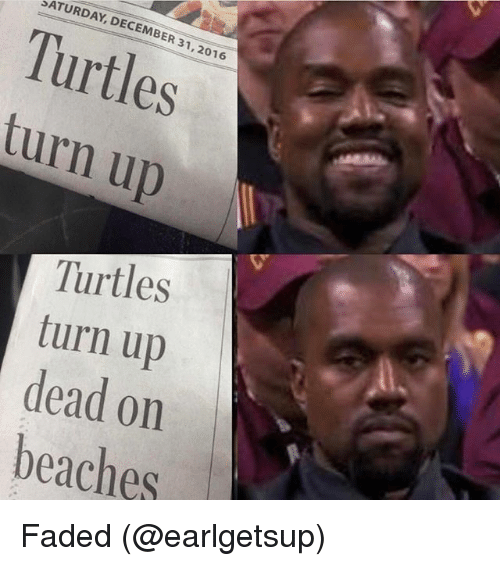 Funny, Turn Up, and Faded: SATURDAY, 2016  Turtles  turn up  Turtles  turn up  dead on  beaches Faded (@earlgetsup)