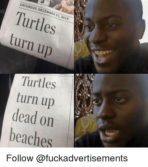 Turn Up, Dank Memes, and Turtles: SATURDAY, DECEMBER 31,2016  Turtles  turn up  Turtles  turn up  dead on  beaches Follow @fuckadvertisements